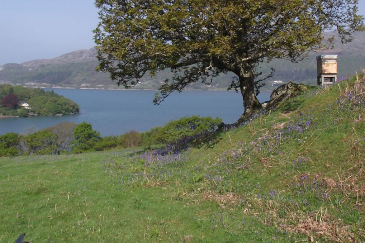 Hive overlooking Mawddach Estuary at Erw Goed