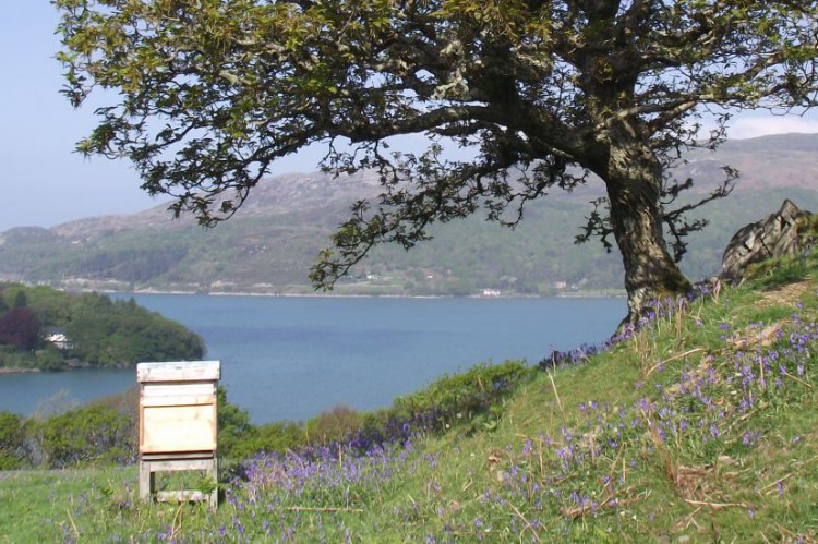 Hive over Mawddach Estuary at Erw Goed